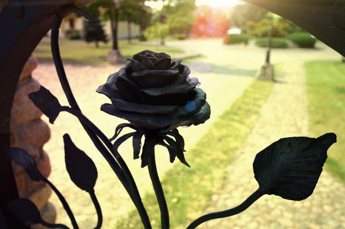 róża w ogrodzeniu i bramie